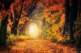 как да правим хубави есенни снимки