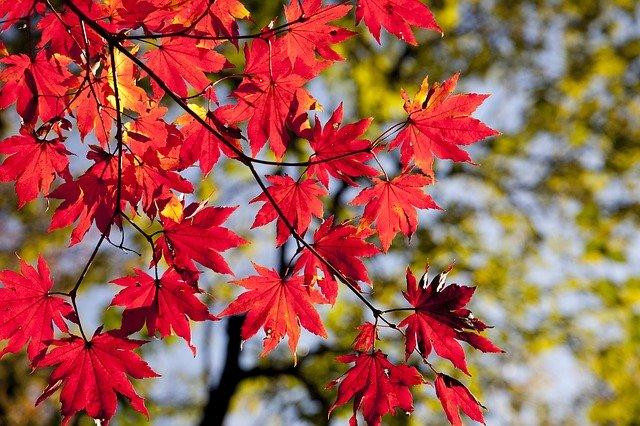 снимки на есенни листа