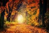 Есенни снимки: съвети за създаване на невероятни снимки на есенни пейзажи