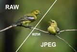 RAW или JPEG?