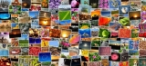 50 вида фотография